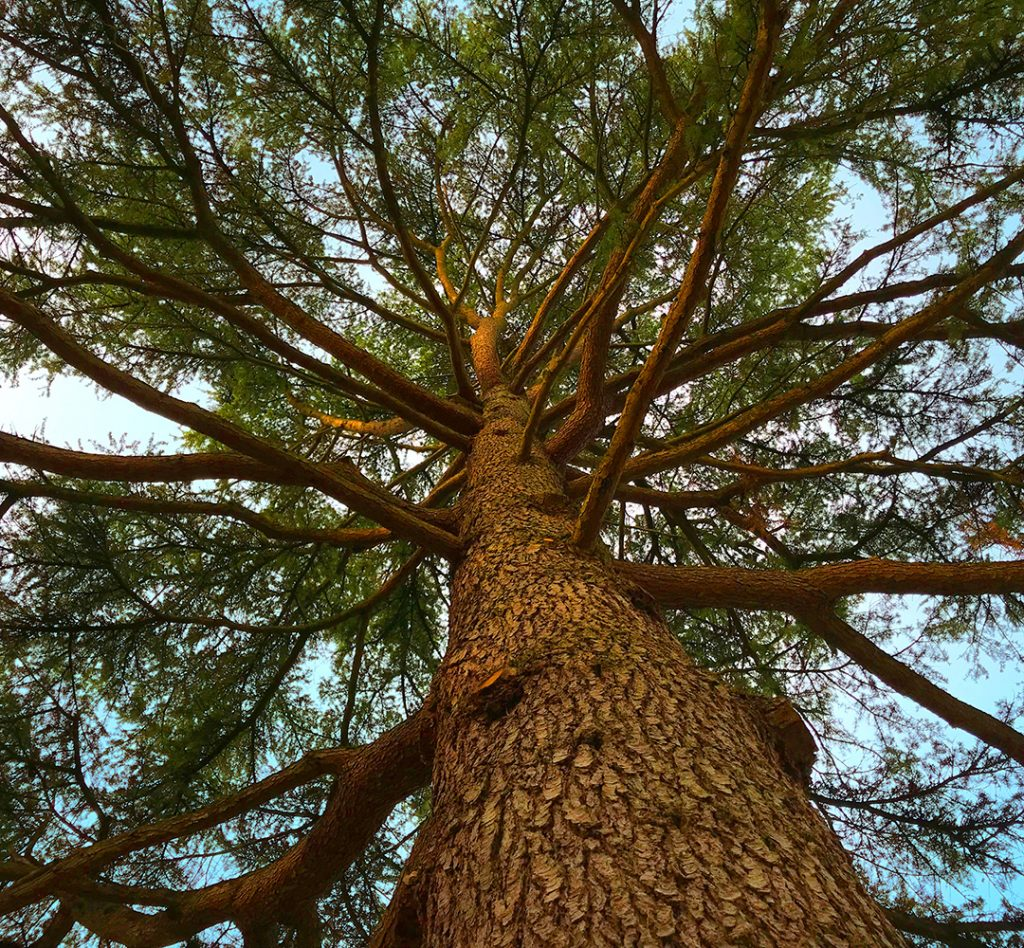 Sylvotherapy – the healing power of the forest