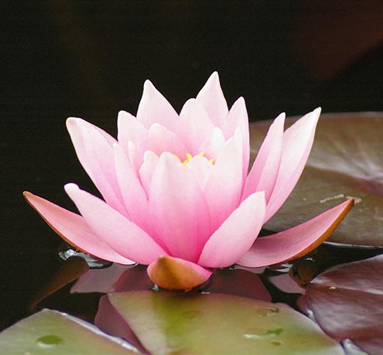 "<div style=""line-height: 1.3; color: #b04640; font-family: catamaran;"">Enseignements sur l'amour divin, stage en ligne inspiré du Narada Bhakti Sutras  <span style=""display: inline-block;""> avec Swami Jyotirmayananda</span></div>"